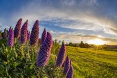 Christchurch_sunset